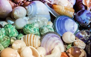A collection of beautiful seashells.